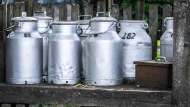 Image de bidons de lait posés