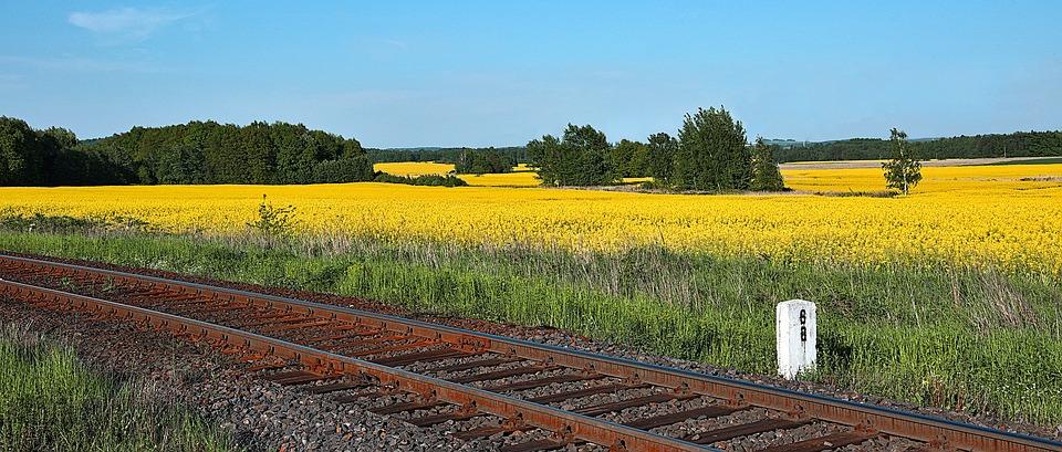Champ de colza et chemin de fer